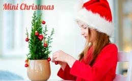Живые ели и сосны от Mini Christmas
